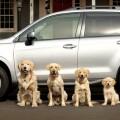 Subaru Barkleys 2